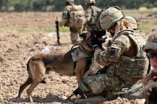 軍人,動物,ほのぼの,画像,まとめ001
