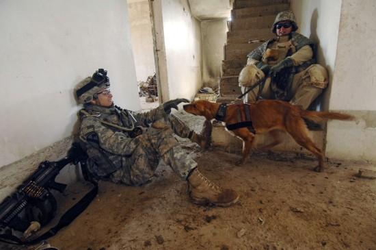 軍人,動物,ほのぼの,画像,まとめ004