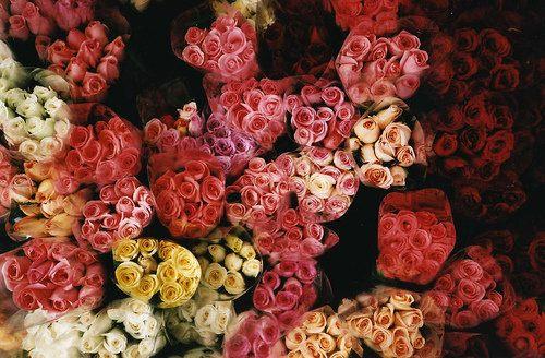 花,フラワー,写真,画像,まとめ005