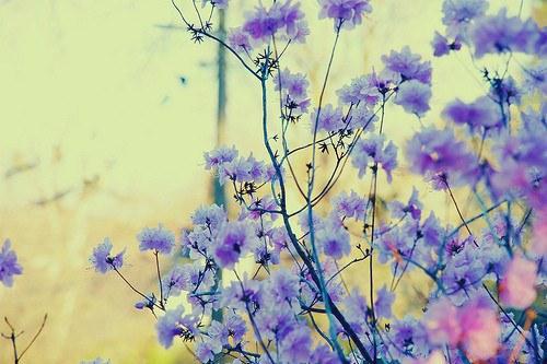 花,フラワー,写真,画像,まとめ009