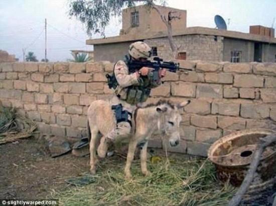 軍人,動物,ほのぼの,画像,まとめ013