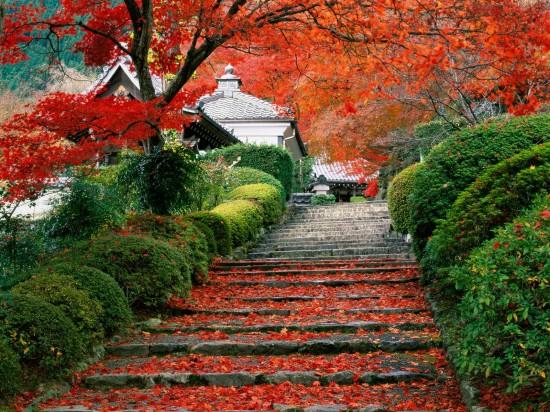 写真,日本,Japan,素敵,美しい,画像,まとめ015