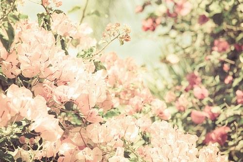 花,フラワー,写真,画像,まとめ015