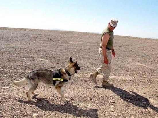 軍人,動物,ほのぼの,画像,まとめ017