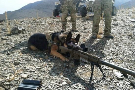 軍人,動物,ほのぼの,画像,まとめ020