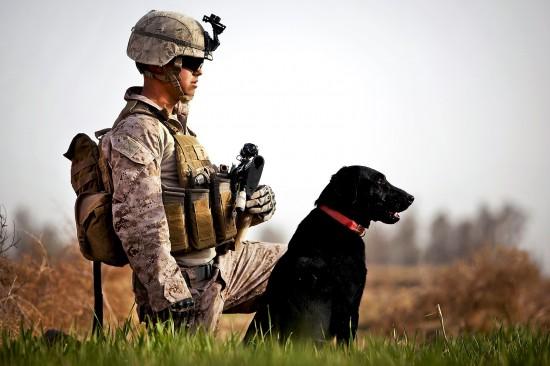 軍人,動物,ほのぼの,画像,まとめ021