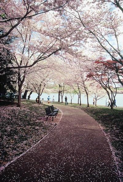 写真,日本,Japan,素敵,美しい,画像,まとめ022