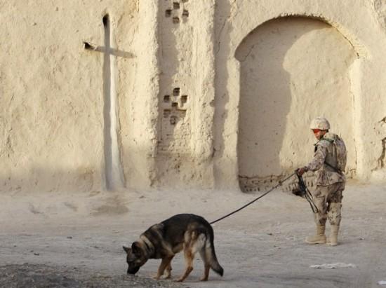 軍人,動物,ほのぼの,画像,まとめ026