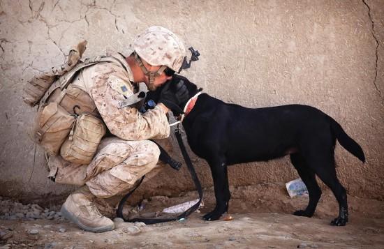 軍人,動物,ほのぼの,画像,まとめ027