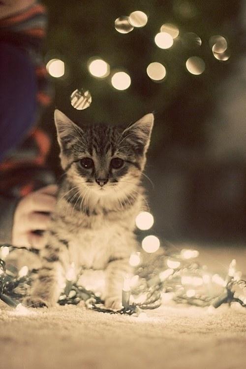 猫,cat,ハイクオリティ,可愛い,画像,まとめ027