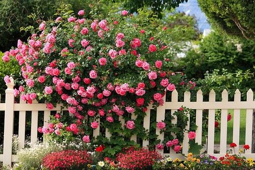 花,フラワー,写真,画像,まとめ030