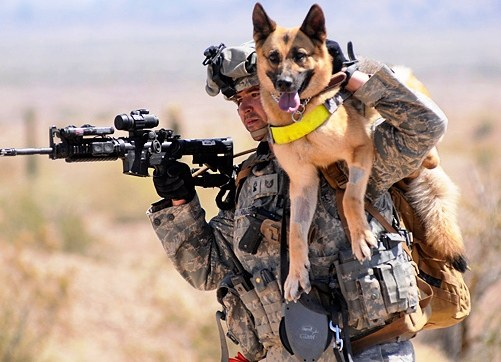 軍人,動物,ほのぼの,画像,まとめ031