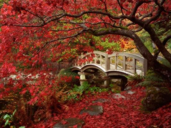 写真,日本,Japan,素敵,美しい,画像,まとめ035