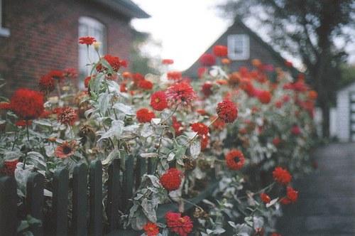 花,フラワー,写真,画像,まとめ050