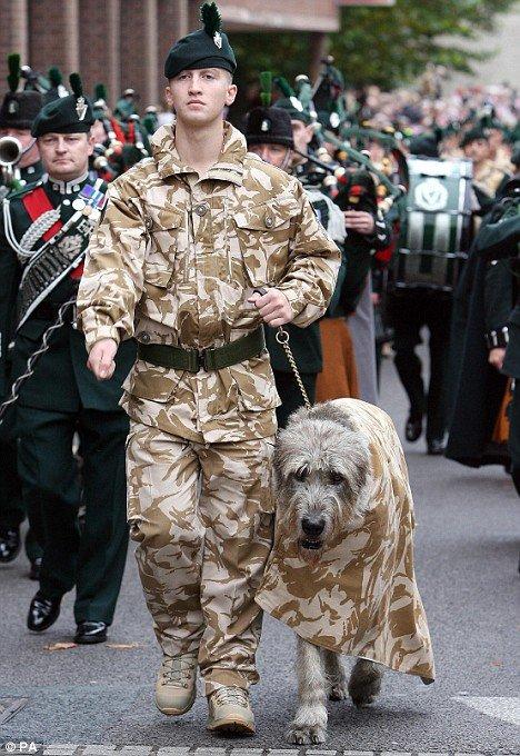 軍人,動物,ほのぼの,画像,まとめ053