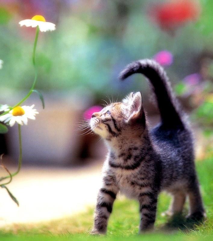 猫,cat,ハイクオリティ,可愛い,画像,まとめ060