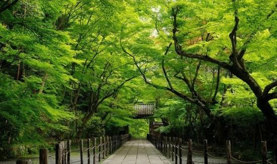 写真,日本,Japan,素敵,美しい,画像,まとめ062