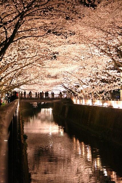 写真,日本,Japan,素敵,美しい,画像,まとめ067