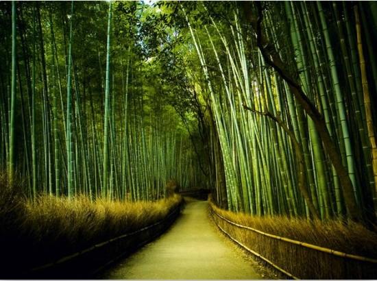 写真,日本,Japan,素敵,美しい,画像,まとめ074
