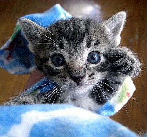 猫,cat,ハイクオリティ,可愛い,画像,まとめ081