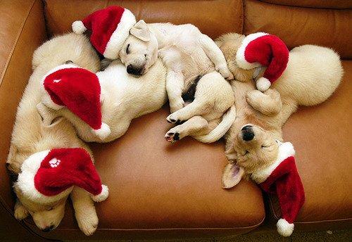 クリスマス,Christmas,ロマンチック,画像,まとめ086