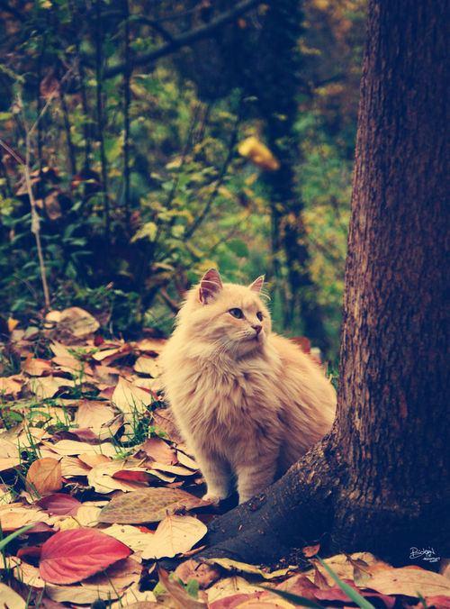 猫,cat,ハイクオリティ,可愛い,画像,まとめ090
