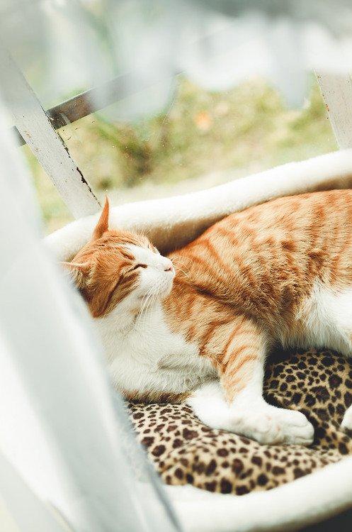 猫,cat,ハイクオリティ,可愛い,画像,まとめ097