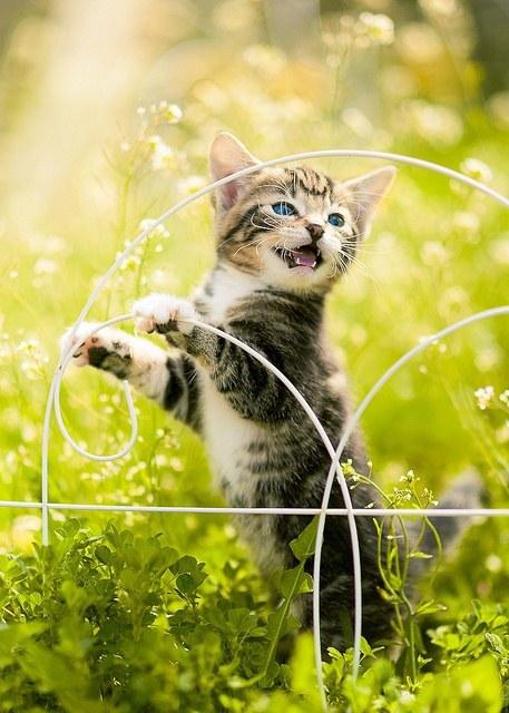 猫,cat,ハイクオリティ,可愛い,画像,まとめ108