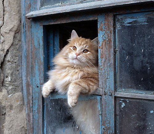 猫,cat,ハイクオリティ,可愛い,画像,まとめ142