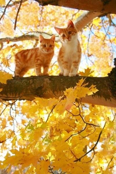 猫,cat,ハイクオリティ,可愛い,画像,まとめ161