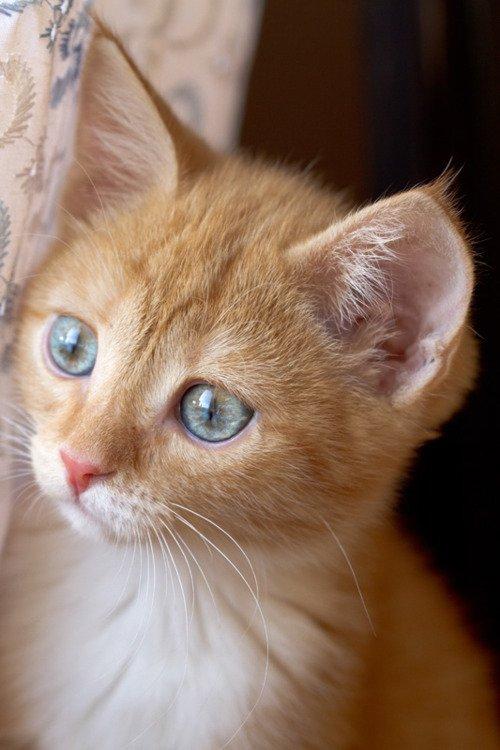 猫,cat,ハイクオリティ,可愛い,画像,まとめ168