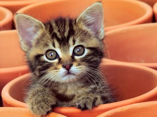 猫,cat,ハイクオリティ,可愛い,画像,まとめ192