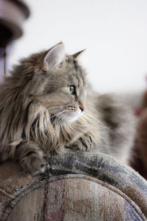 猫,cat,ハイクオリティ,可愛い,画像,まとめ197