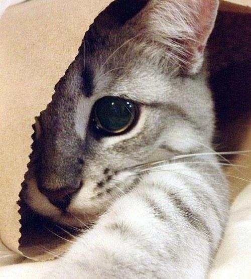 猫,cat,ハイクオリティ,可愛い,画像,まとめ204