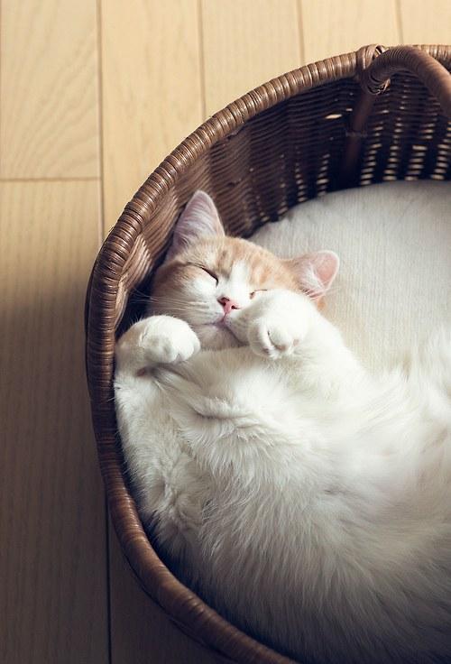 猫,cat,ハイクオリティ,可愛い,画像,まとめ242