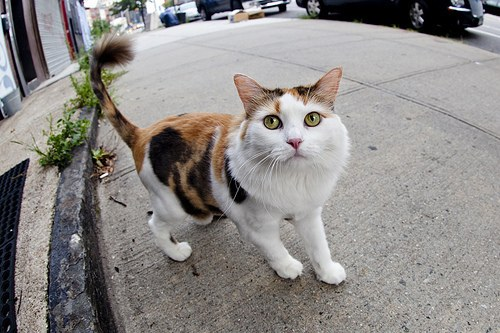 猫,cat,ハイクオリティ,可愛い,画像,まとめ245