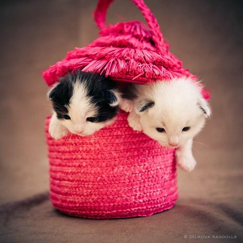 猫,cat,ハイクオリティ,可愛い,画像,まとめ299