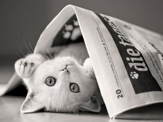 猫,cat,ハイクオリティ,可愛い,画像,まとめ306