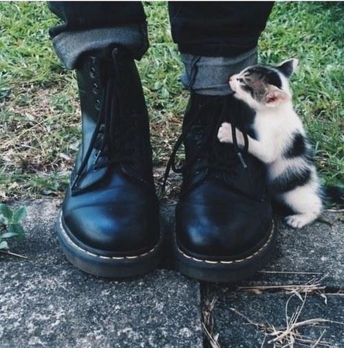 猫,cat,ハイクオリティ,可愛い,画像,まとめ381
