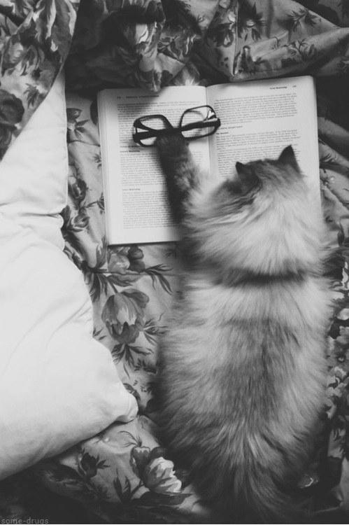 猫,cat,ハイクオリティ,可愛い,画像,まとめ385