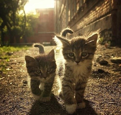 猫,cat,ハイクオリティ,可愛い,画像,まとめ439