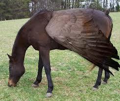 動物,合成写真,凄過ぎる,話題032