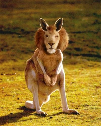 動物,合成写真,凄過ぎる,話題055