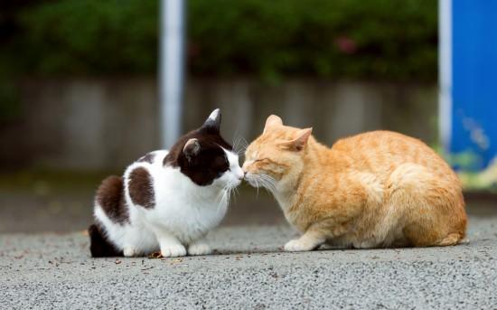 可愛過ぎる,キス,猫,画像,まとめ90637B4E90EC8B44F4CD6901C738B07EAA487778A3DE8053809C82CBC108BF65