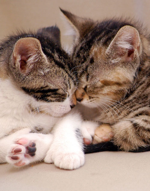 可愛過ぎる,キス,猫,画像,まとめCD507F354EEB2B8678E1158A810250ECDB2C09132C80EB5EEC5FEAAE852EBEAD