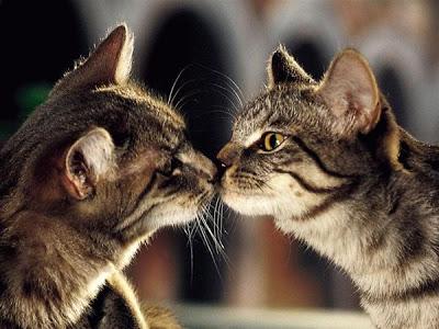 可愛過ぎる,キス,猫,画像,まとめDE54CEF8EA29E1CA2F80089B39A97C6DD835B8D4E3C26905D1F6B776205057DF