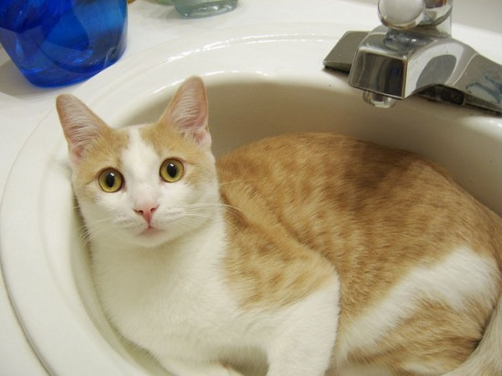 ラブリー,洗面所,大好き,ネコ,画像,まとめ002