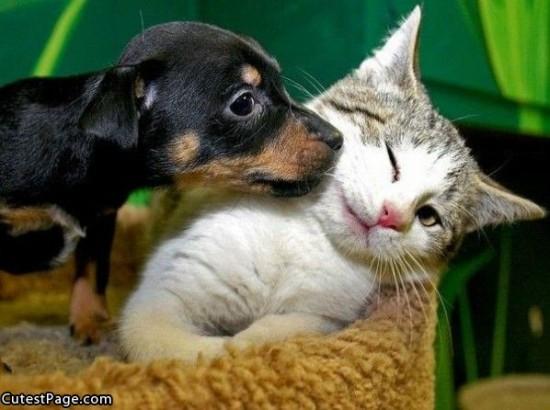 ネコ,ラブリー,kiss,画像,まとめ003