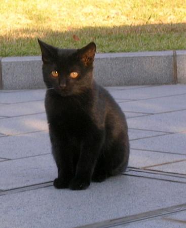 癒し,黒猫,画像,まとめ003