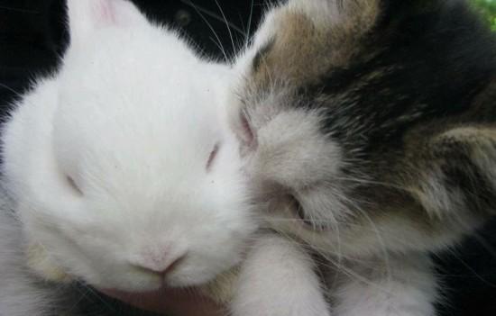 ネコ,ラブリー,kiss,画像,まとめ006